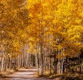 向秋天白杨木的路 免版税库存照片