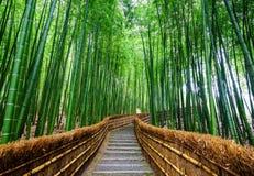 向竹森林, Arashiyama,京都,日本的道路 库存图片