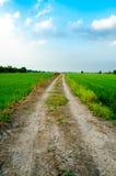 向米领域的路 库存图片