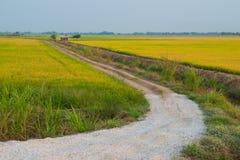 向米领域的路 库存照片