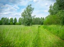 向自然的道路在天空蔚蓝下 免版税库存照片