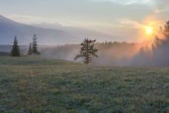 向落叶松属木头的路。一个风景 图库摄影