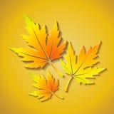 向量与槭树叶子的秋天背景 免版税库存照片