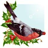 向量圣诞节与红腹灰雀的贺卡 免版税库存照片