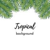 向量背景 卡片的与被隔绝的框架样式绿色异乎寻常的热带椰子棕榈叶的模板或海报 库存例证