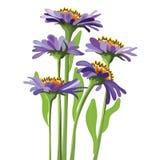 向量花卉设计,紫色翠菊 免版税库存照片