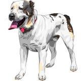 向量草图狗中央亚洲牧羊犬品种 库存图片