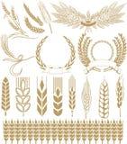 向量麦子 免版税库存图片