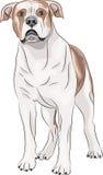 向量 美国牛头犬 免版税图库摄影