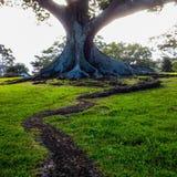向结构树的路径 库存图片