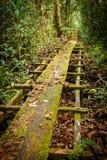 向Bornean森林的道路 库存照片