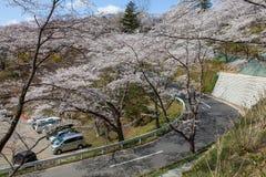 向Funaoka城堡废墟公园的路在宫城,日本 免版税库存照片