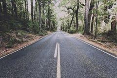 向Milford Sound,新西兰的一条空的路 免版税库存图片