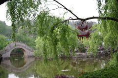 君山海岛杨柳在洞庭湖 库存照片