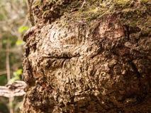 吠声一个非常高详细的宏指令在一棵树的与许多Textur 免版税库存图片