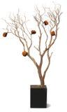 吠声叶子留下老橙色大农场主结构树&# 免版税库存图片