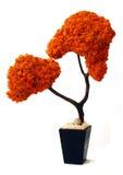 吠声叶子留下老橙色大农场主结构树&# 免版税图库摄影