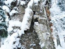 吠声在雪霜的树冬天 免版税库存照片