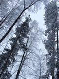 吠声在雪霜的树冬天 免版税库存图片