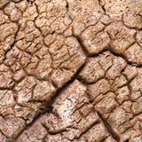吠声干燥栓皮栎的树 免版税库存照片