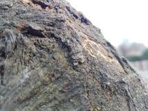 吠声接近的dof自然浅纹理结构树 库存图片