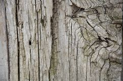 吠声木头纹理 免版税库存图片