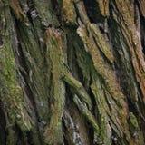 吠声树纹理本质上 库存图片