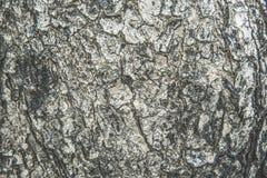 吠声树纹理,抽象纹理 图库摄影