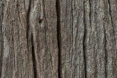 吠声树纹理 库存照片