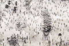 吠声桦树关闭纹理视图 库存图片