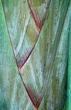 吠声棕榈树 库存图片