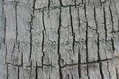 吠声椰子模式 免版税库存图片