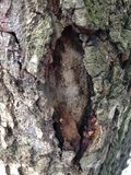 吠声的美好的结构表面在不同的树的 您将看相当异常的事 图库摄影