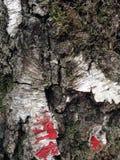 吠声的美好的结构表面在不同的树的 您将看相当异常的事 库存照片