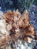 吠声的美好的结构表面在不同的树的 您将看相当异常的事 库存图片