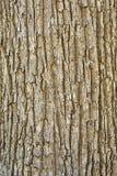 吠声纹理结构树 库存照片