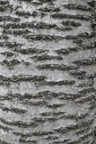 吠声纹理结构树 库存图片