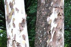 吠声纹理结构树 免版税库存照片