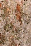 吠声纹理结构树 图库摄影