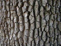 吠声结构树 免版税库存图片