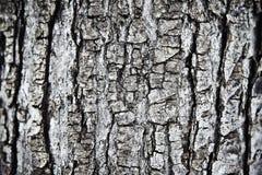 吠声结构树 库存照片