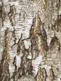 吠声结构树 免版税库存照片