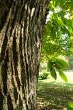 吠声结构树 图库摄影