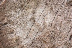 吠声老白杨树纹理结构树 免版税图库摄影