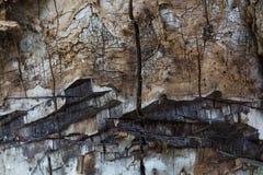 吠声老结构树 免版税图库摄影