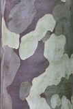 吠声胶被仿造的结构树 免版税图库摄影