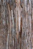 吠声近景结构树 一个背景 图库摄影