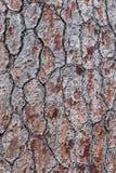 吠声近景结构树 一个背景 免版税库存图片