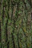 吠声近景结构树 库存图片