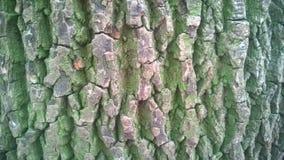 吠声近景结构树 免版税库存图片